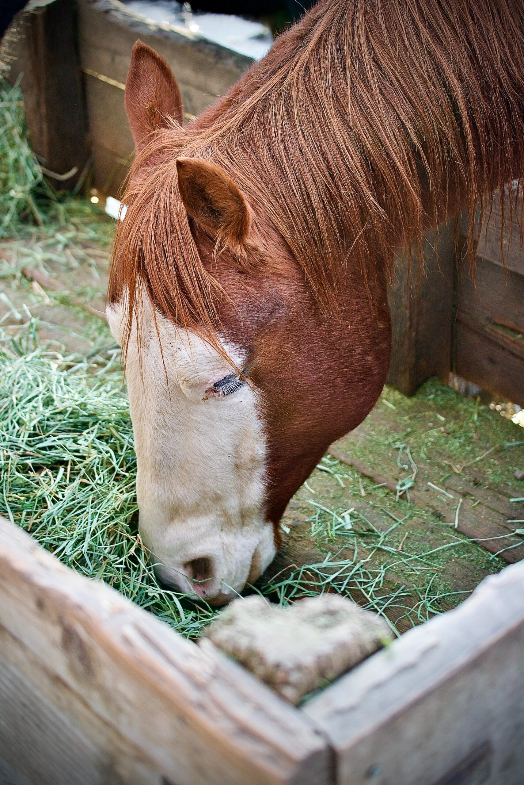 equine therapy for florida addiction treatment